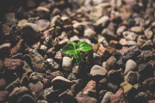 Spring Forward Toward Your Goals